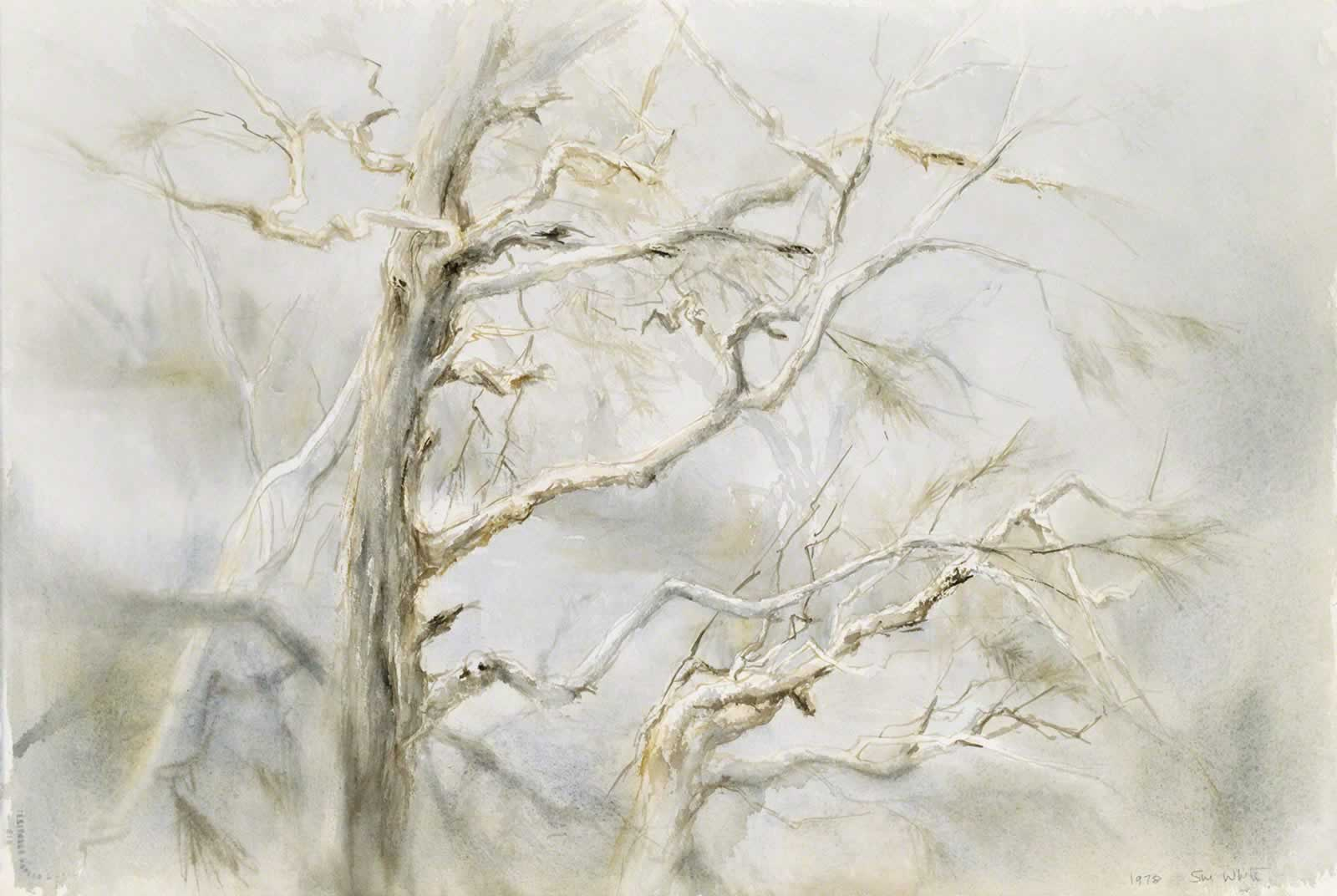 Gnarled pines, Jindabyne by Susan Dorothea White