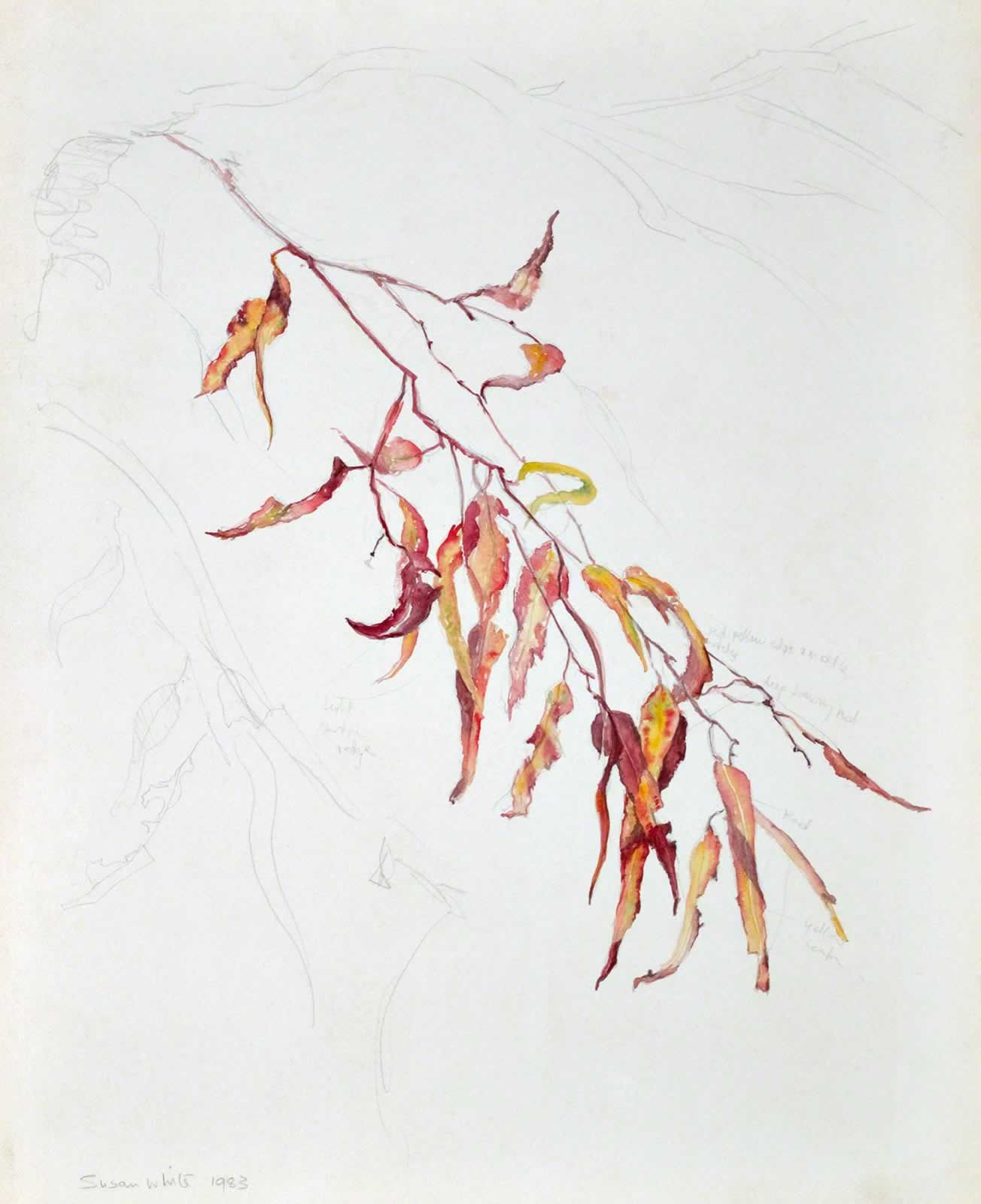 Gum leaves (study for harpsichord lid) by Susan Dorothea White