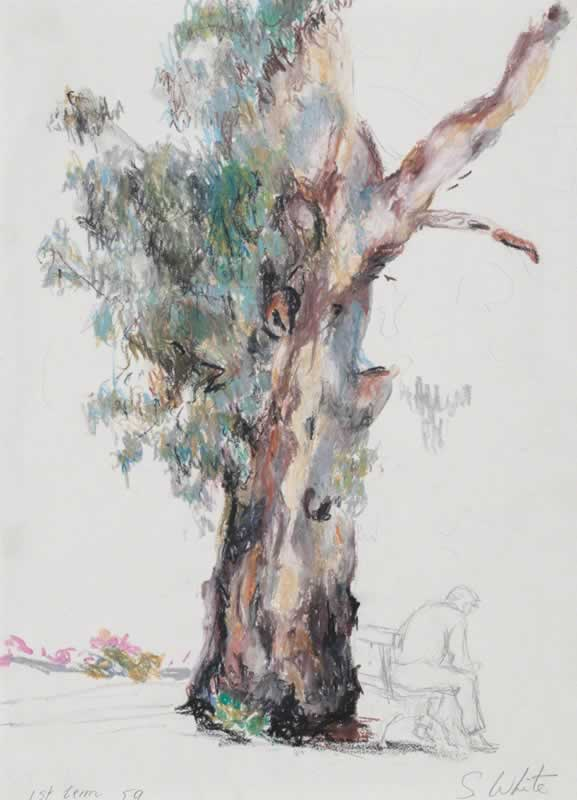 Man seated under old gum by Susan Dorothea White