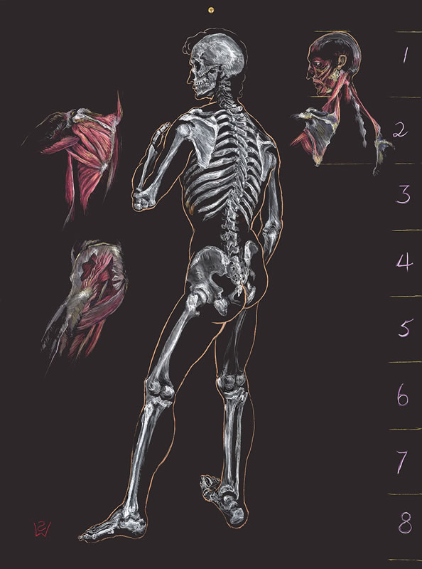 Anatomy Of Michelangelos David Proportion And Contrapposto