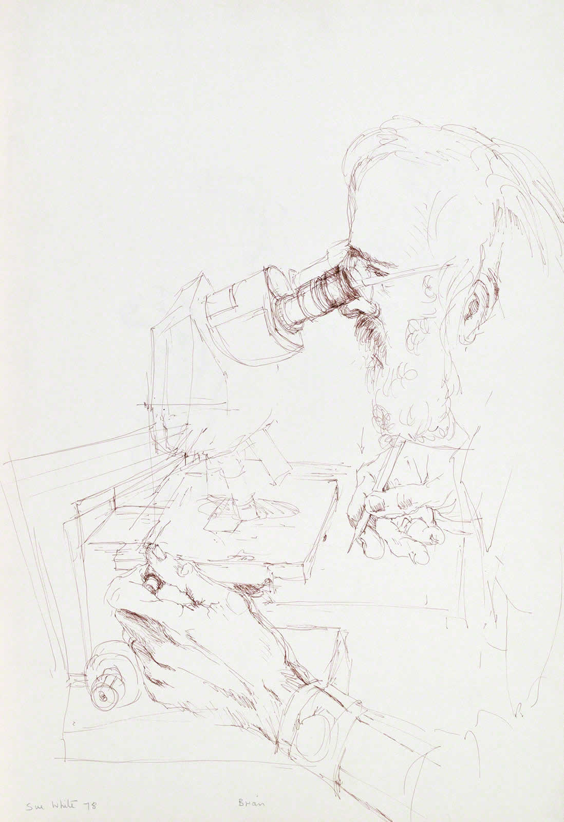 Scientist working at microscope: study for portrait 'Dr Brian Freeman' by Susan Dorothea White
