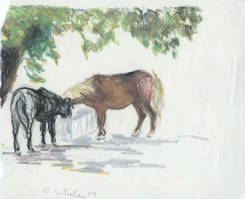 Two horses at trough, Ivymeade, Burnside by Susan Dorothea White