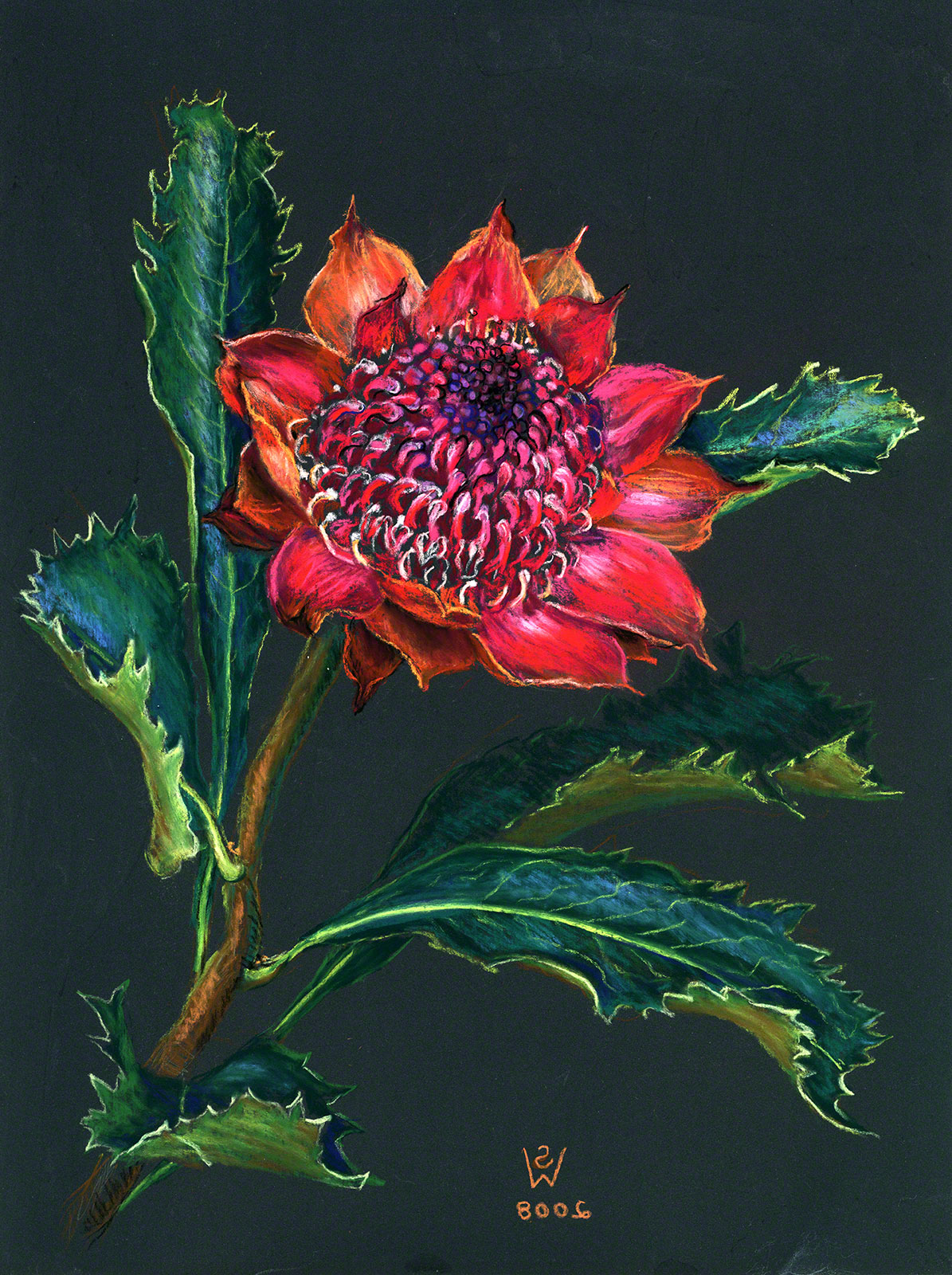 Waratah (goldpoint and pastel) by Susan Dorothea White